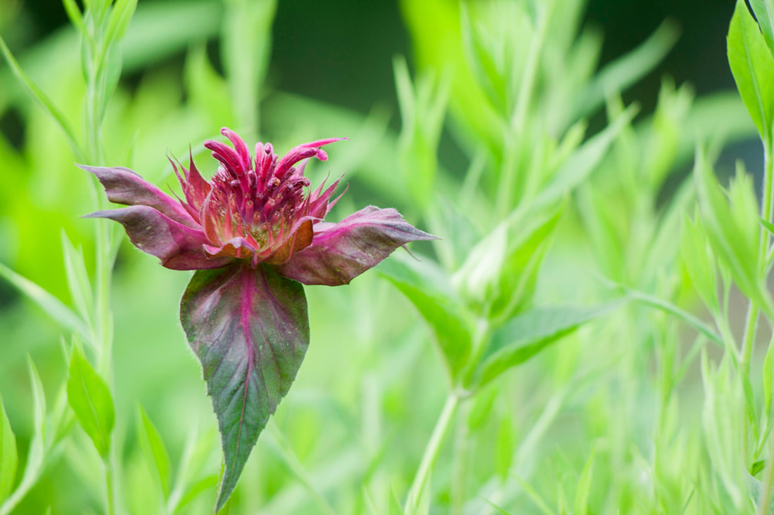 Beebalm Photography, Rule of Thirds